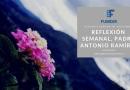 Reflexión, Segunda Semana de Noviembre